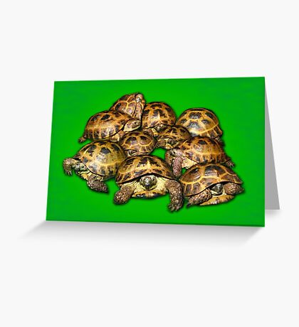 Greek Tortoise Group on Bright Green Background Greeting Card