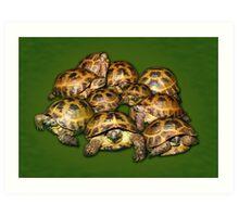 Greek Tortoise Group on Darn Green Background Art Print