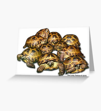 Greek Tortoise Group Greeting Card