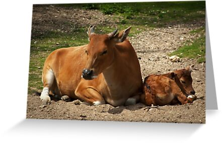 Mom and the baby by steppeland