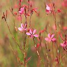 Pretty in Pink by Karen E Camilleri