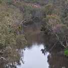 Yarra River at Studley Park by Peter Krause