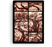 African Shadow Trees Canvas Print