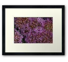 the many purple dots Framed Print