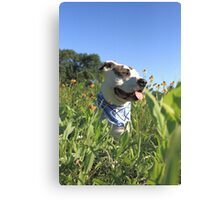 Pit Bull T-Bone Canvas Print