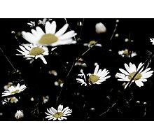 Black Background Photographic Print