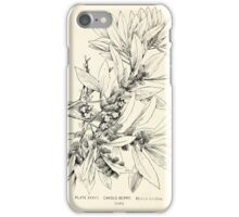 Southern wild flowers and trees together with shrubs vines Alice Lounsberry 1901 037 Candleberry iPhone Case/Skin