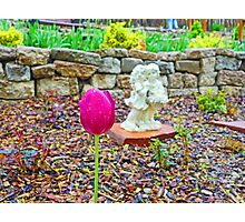 KE Garden Study 1  Photographic Print