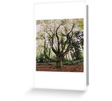 Forest Magic Greeting Card