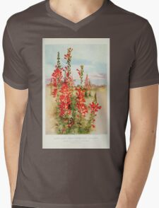 Southern wild flowers and trees together with shrubs vines Alice Lounsberry 1901 147 Raven Footed Gilia T-Shirt