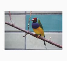 Colourful Gouldian finch bird print One Piece - Short Sleeve