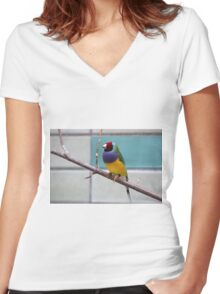 Colourful Gouldian finch bird print Women's Fitted V-Neck T-Shirt