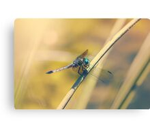 The Dragon's Roost Canvas Print