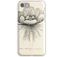 Southern wild flowers and trees together with shrubs vines Alice Lounsberry 1901 013 Water Lettuce iPhone Case/Skin