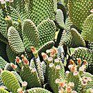 Cactus by Dana Yoachum