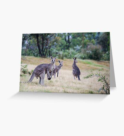 Kangaroo Trio Greeting Card