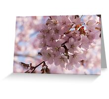 Pink Spring - A Cloud of Delicate Cherry Blossoms Greeting Card