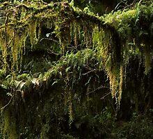 Deep green by Duncan Cunningham