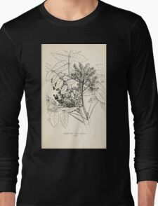 Southern wild flowers and trees together with shrubs vines Alice Lounsberry 1901 096 Rhus Michauxii Long Sleeve T-Shirt