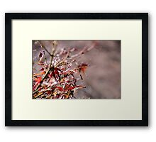 Autumn Touch Framed Print