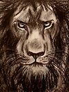 Lion - Charcoal drawing of a Lion by Rebecca Rees