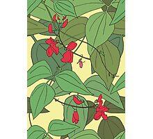 Scarlet runner beans pattern 2 Photographic Print