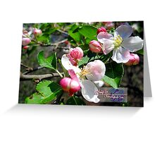 sweetness of spring Greeting Card