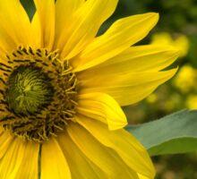 Everybody Loves Sunflowers Sticker