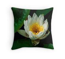 Pure white lily pad flower Throw Pillow