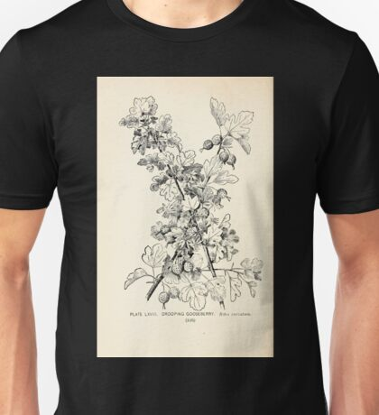 Southern wild flowers and trees together with shrubs vines Alice Lounsberry 1901 068 Drooping Gooseberry Unisex T-Shirt