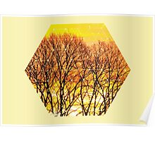 Nature and Geometry - Trees and Sunset Poster