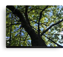 Looking up through the branches Canvas Print