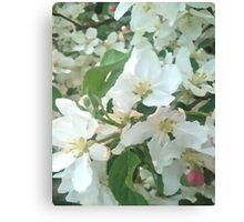 Painted White Petals Canvas Print