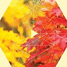 Nature and Geometry - Autumn Leaves by Denis Marsili