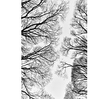 Clearings Photographic Print