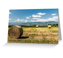 hay bales in the field Greeting Card