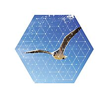 Nature and Geometry - The Seagull Photographic Print