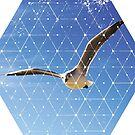 Nature and Geometry - The Seagull by Denis Marsili