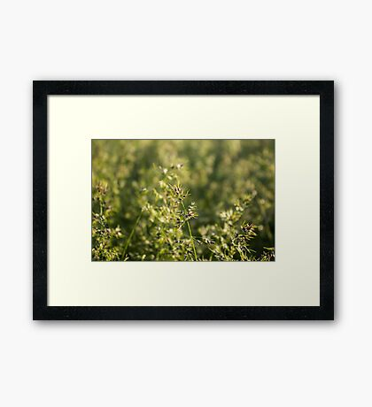 Field a blade of grass. Closeup. Framed Print