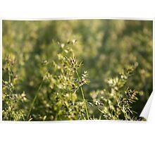 Field a blade of grass. Closeup. Poster
