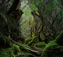 The Way Of The Witches Finger by Claire Walsh