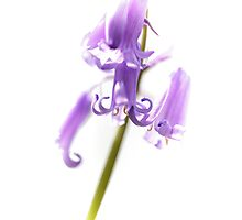 Jazzy Bluebells Photographic Print