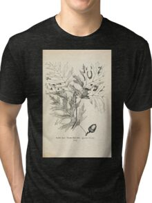 Southern wild flowers and trees together with shrubs vines Alice Lounsberry 1901 042 Texan Red Oak Tri-blend T-Shirt