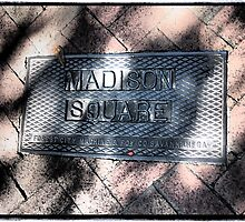 Madison Square by Cyn Piromalli