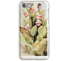 Southern wild flowers and trees together with shrubs vines Alice Lounsberry 1901 022 Showy Lady's Slipper iPhone Case/Skin