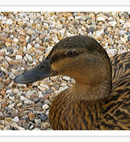 Quack! Sticker