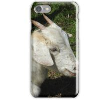 Goat With Small Horns iPhone Case/Skin