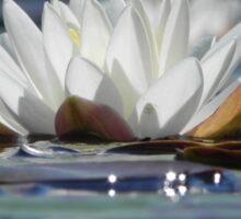 Lily Reflection Sticker