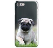 Cute Pug Dog In Grass iPhone Case/Skin