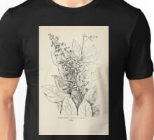 Southern wild flowers and trees together with shrubs vines Alice Lounsberry 1901 122 Elliottia Racemosa Unisex T-Shirt
